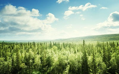Запасы леса в России. Рейтинг стран – 2021